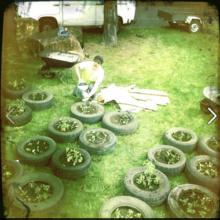 Stuart Muir Wilson: Guerrilla Gardening