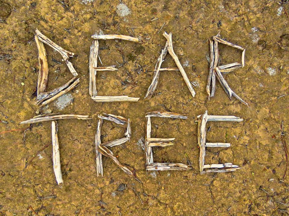 Dear Tree Logo Rose Turtle Ertler